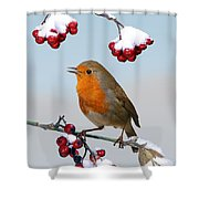 Robin On Winter Cotoneaster Shower Curtain