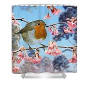 Robin On Winter Flowering Plum Shower Curtain