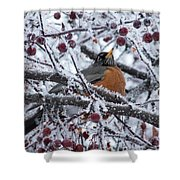 Robin Perched In Crabapple Tree Shower Curtain