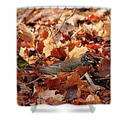 Robin Playing In Fallen Leaves Shower Curtain