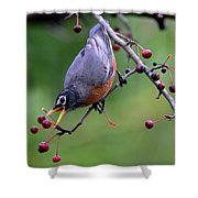 Robin Reaching For Berry Shower Curtain