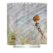 Robin Resting Shower Curtain