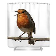 Robin Singing On Branch Shower Curtain