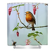 Robin Singing On Flowering Currant Shower Curtain