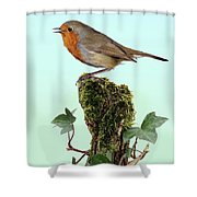 Robin Singing On Ivy-covered Stump Shower Curtain