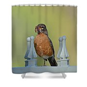 Robin With Worm II Shower Curtain