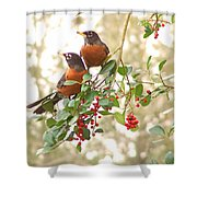 Robins In Holly Shower Curtain