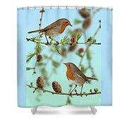 Robins On Larch Shower Curtain