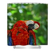 Rock A Bye Birdie Shower Curtain