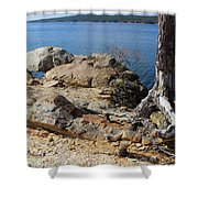 Rock And Root Shower Curtain