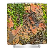 Rock And Shrub Abstract I  Shower Curtain