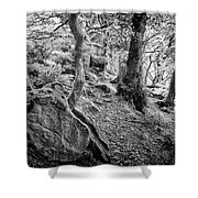 Rock And Trees Shower Curtain