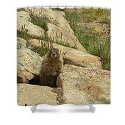 Rock Critter Shower Curtain