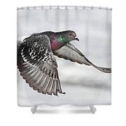 Rock Dove In Flight Shower Curtain