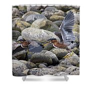 Rock Hoppers Shower Curtain