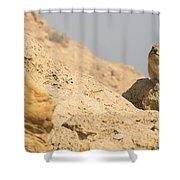 Rock Hyrax Procavia Capensis Shower Curtain
