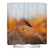 Rock Lizard Shower Curtain