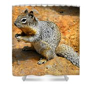 Rock Squirrel Shower Curtain