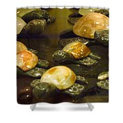 Rock Turtle Shower Curtain