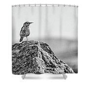 Rock Wren 2bw Shower Curtain