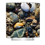 Rocks And Shells Shower Curtain