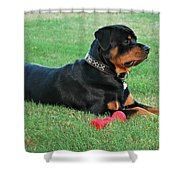 Rottweiler Portrait Shower Curtain
