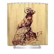 Rocky Mountain Bighorn Sheep Shower Curtain