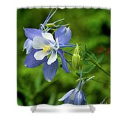 Rocky Mountain Blue Columbine Shower Curtain