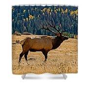 Rocky Mountain Bull Elk Shower Curtain
