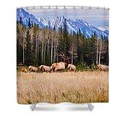 Rocky Mountain Elk In The Rockies Shower Curtain