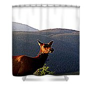 Rocky Mountain Elk Vi Shower Curtain
