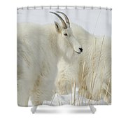 Rocky Mountain Goats In Wyoming Winter Shower Curtain