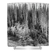 Rocky Mountain High Elevation Forest Large Panorama Shower Curtain