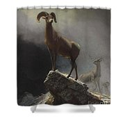 Rocky_mountain_sheep_or_big_horn,_ovis,_montana Shower Curtain