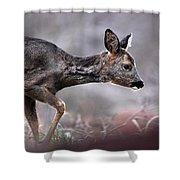 Roe Deer Shower Curtain