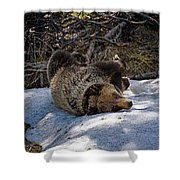 Roll In The Snow Shower Curtain