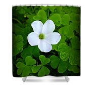 Roll Me Over In The Clover Shower Curtain