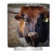 Rolly Polly Shower Curtain