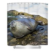 Roly Poly Seal Shower Curtain