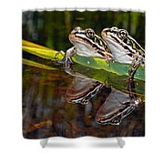 Romance Amongst The Frogs Shower Curtain