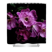 Romance - Wc Shower Curtain