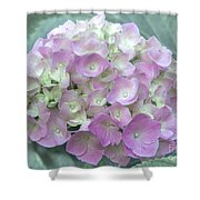 Romantic Pink Hydrangea Shower Curtain