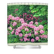 Romantic Rhododendrons Shower Curtain
