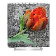 Romantic Tulip Shower Curtain