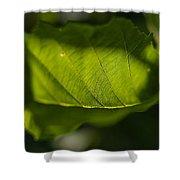 Rontgen Shower Curtain