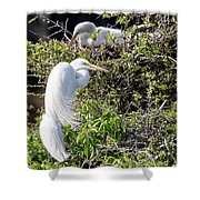 Rookery Family Shower Curtain