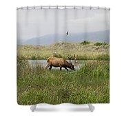 Roosevelt Elk 1 Shower Curtain