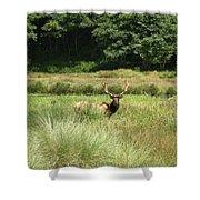 Roosevelt Elk 2 Shower Curtain
