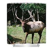 Roosevelt Elk Shower Curtain