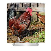 Rooster And Friend Shower Curtain